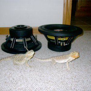 HX2lizards_copy